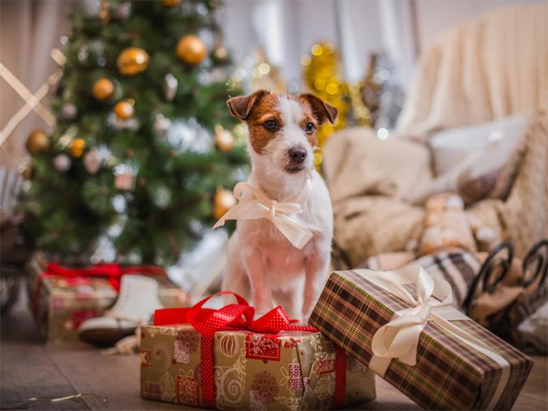 Чего херсонцам ждать от года Жёлтой Земляной Собаки?