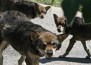 «Собачья» проблема в Херсоне: есть ли сдвиги?