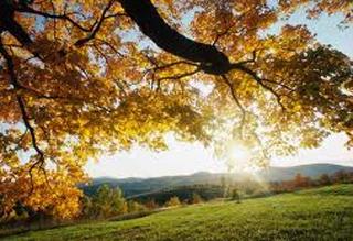 Синоптики розповіли, якою буде осінь