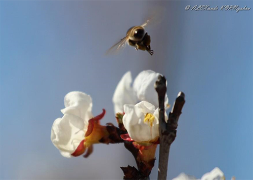 Всех херсонцев с праздником весны, мира и труда!