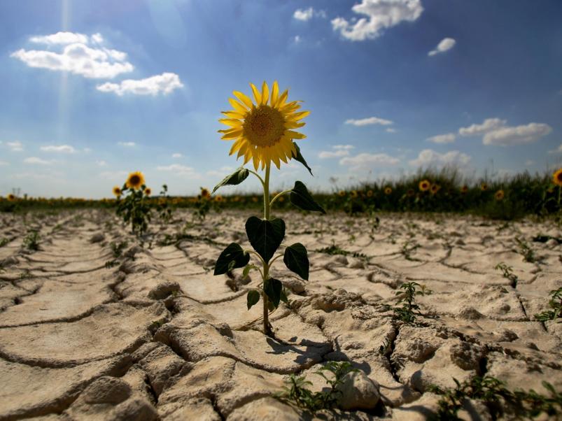 Весенняя засуха пришла на Херсонщину