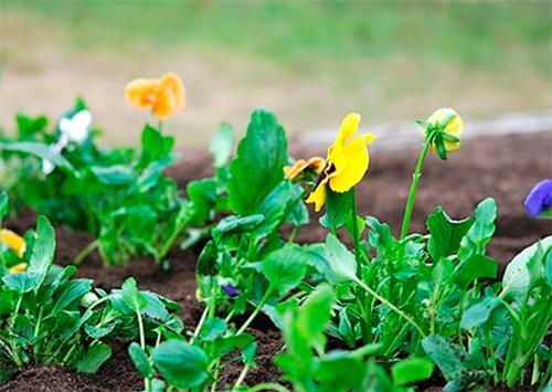 В Херсоне попался «цветочный» вор