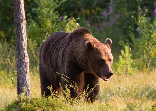 Сбежавший медведь в херсонском Гидропарке: подробности