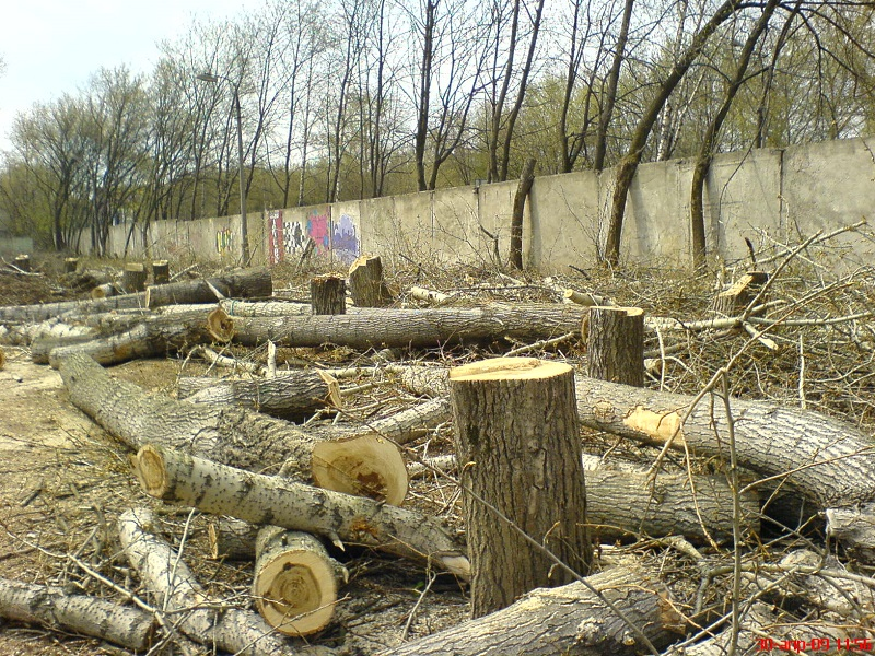В Херсоні боротимуться з незаконною вирубкою зелених насаджень