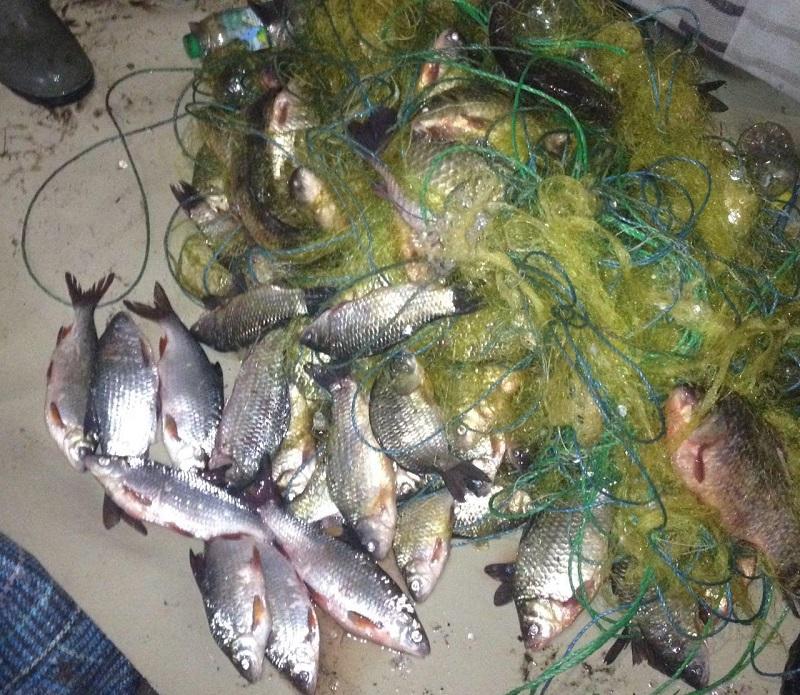 Рибоохоронний патруль Херсонщини протягом одного дня викрив п'ятьох бракон'єрів