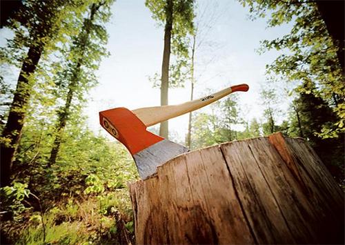 Милиция «крышует» несанкционированную вырубку лесов?