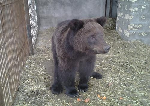 Из зоны боевых действий на Херсонщину эвакуировали беженку-медведицу