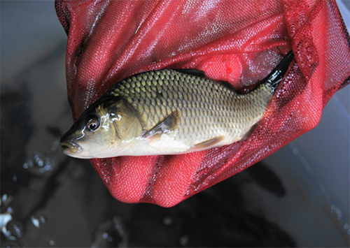 На Херсонщине рыбе перекрывают кислород