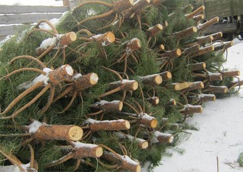 На Херсонщине будет контролироваться продажа ёлок и пиротехнических изделий