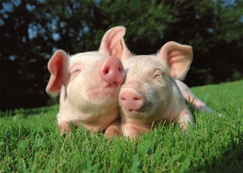 У поточному році на Херсонщині збільшилось виробництво продуктів тваринництва