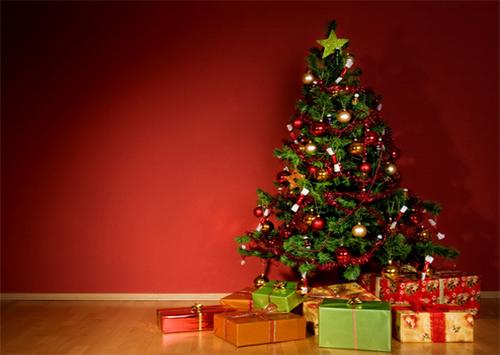 Сколько стоит новогодняя елка на Херсонщине?