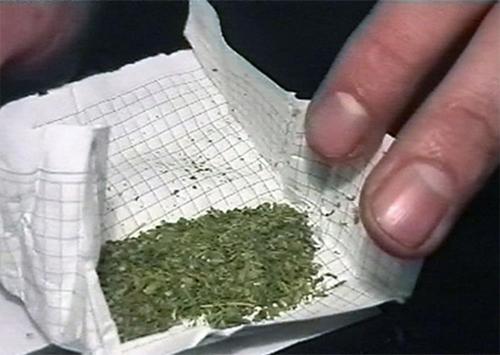Херсонские курорты «зачистят» от наркотиков