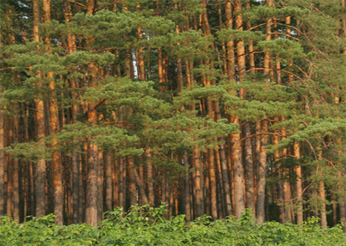 Херсонські ліси допомагають обласному бюджету