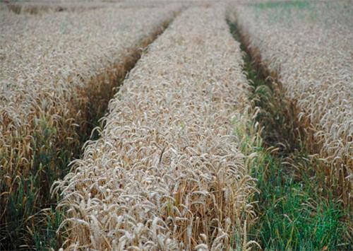 IFC та Аграрний страховий пул обговорили можливість подальшої співпраці