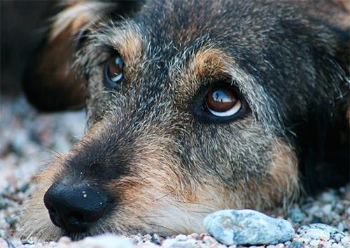 В Херсоне массовое отравление собак