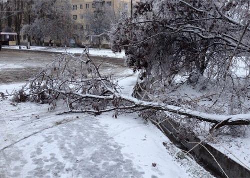Упавшие деревья в Херсоне спасают бездомных