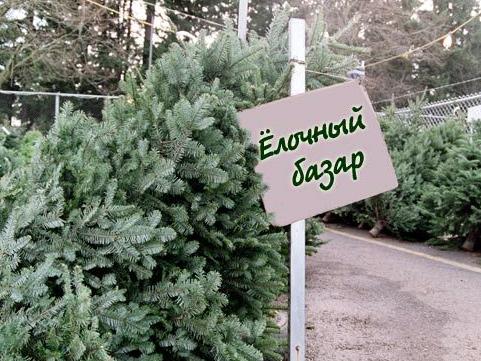 На продаже новогодних елок лесхозы Херсонщины хорошо заработали