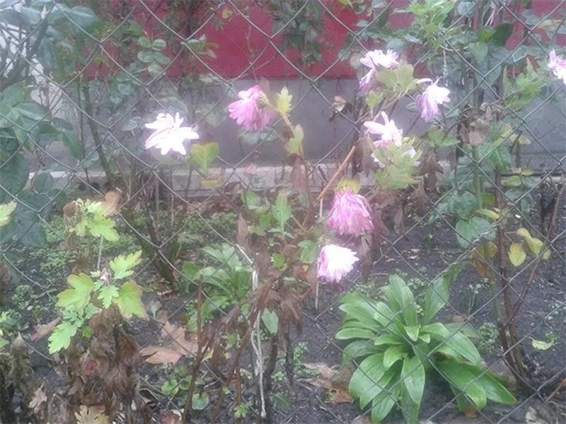 На Херсонщину пришла неурочная весна