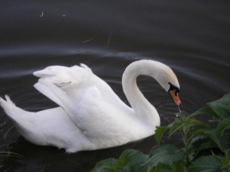 Перелетные птицы массово гибнут на Херсонщине