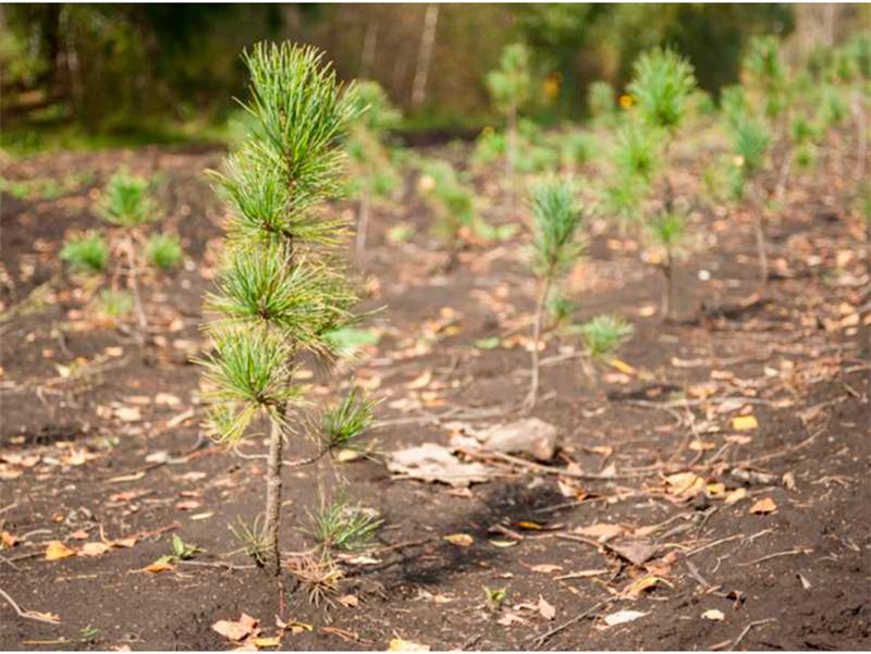 Как в Херсоне лес прижился