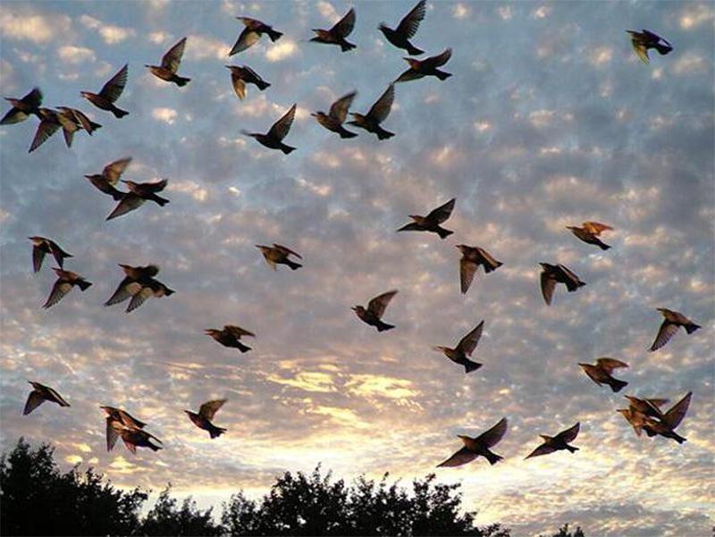 На Херсонщине продолжают гибнуть дикие птицы