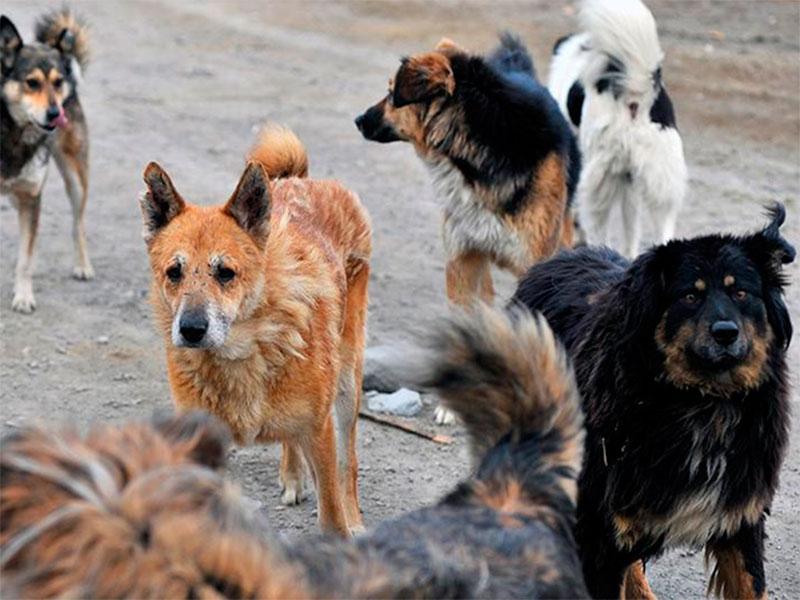 На Херсонщине безнадзорные животные угрожают людям