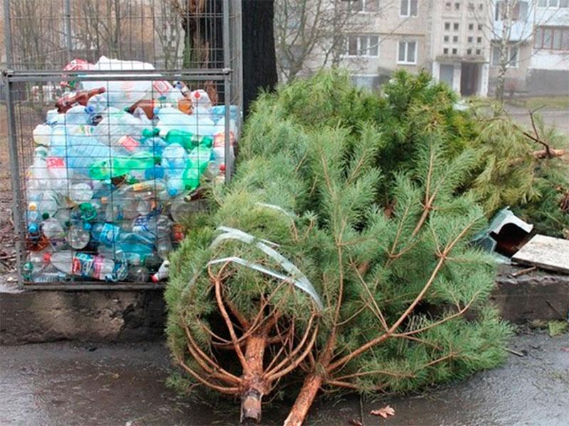 Куда в Херсоне девать новогоднюю елку