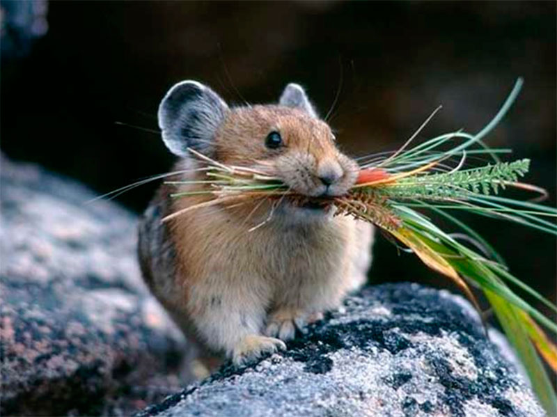 Аграрии Херсонщины опасаются нашествия мышей