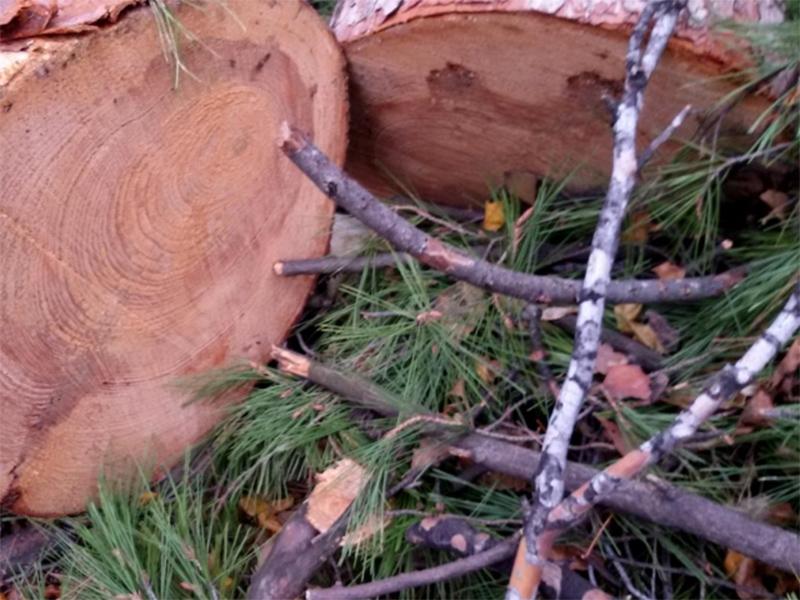 Богатенькие браконьеры попались в лесу на Херсонщине