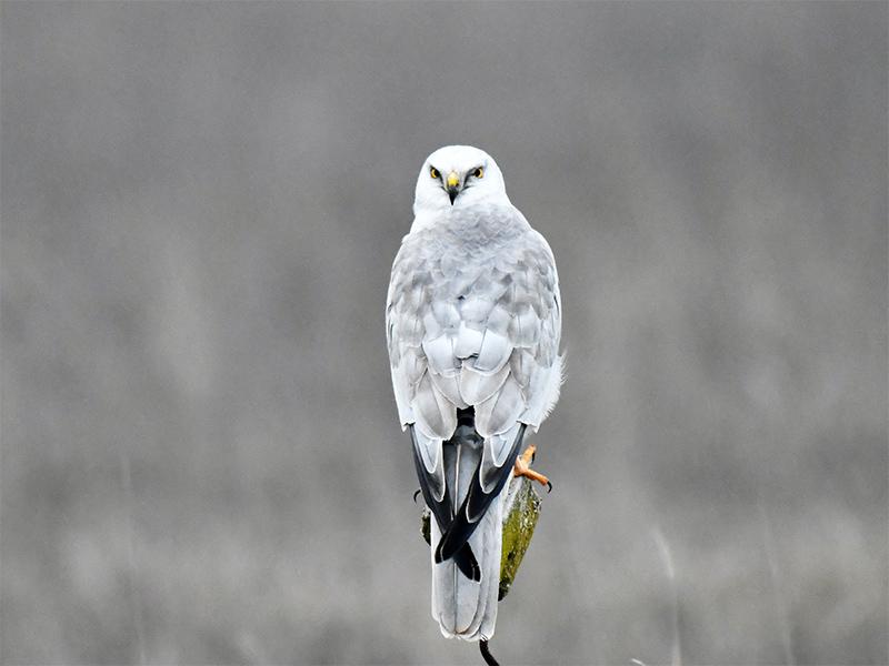 На Херсонщине обнаружили исчезающую птицу