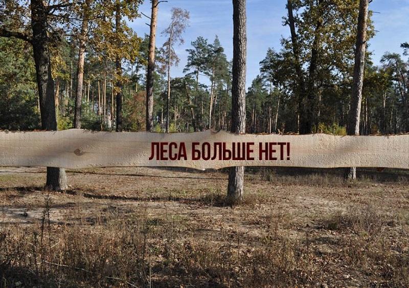 Херсонська прокуратура не допустила незаконного будівництва у лісі