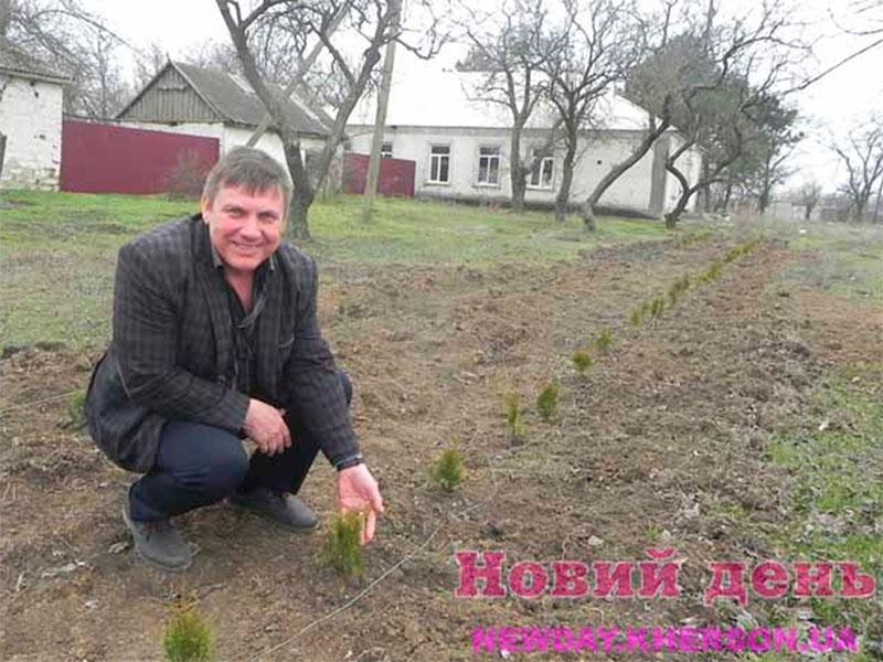 На Херсонщине выращивают китайскую хвою