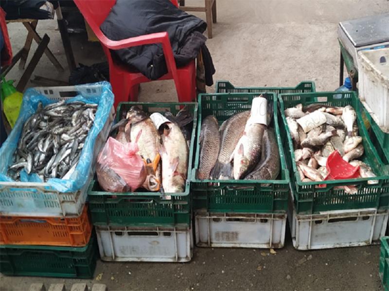 Браконьерские уловы под видом прудовой рыбы сбывают в Херсоне