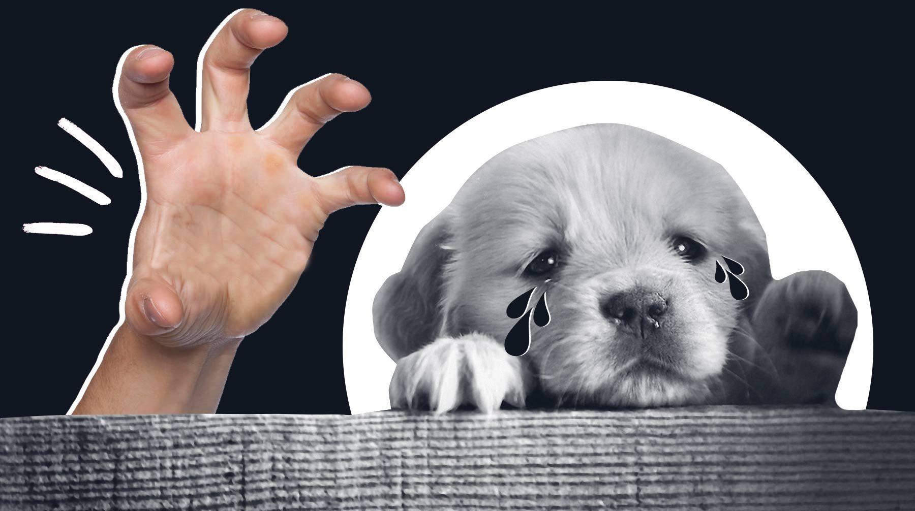 Парня с Херсонщины обманули при покупке собаки