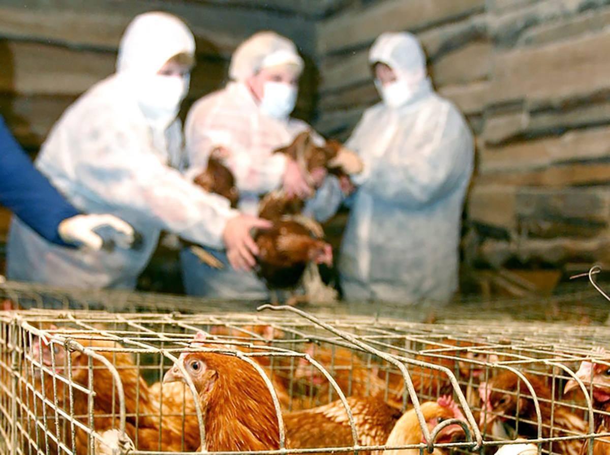 В Херсонской области обнаружен птичий грипп