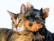 На Херсонщині власники породистих тварин оформили на них більше тисячі паспортів