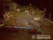 На Херсонщине задержали лесного браконьера с 3 кубометрами дров