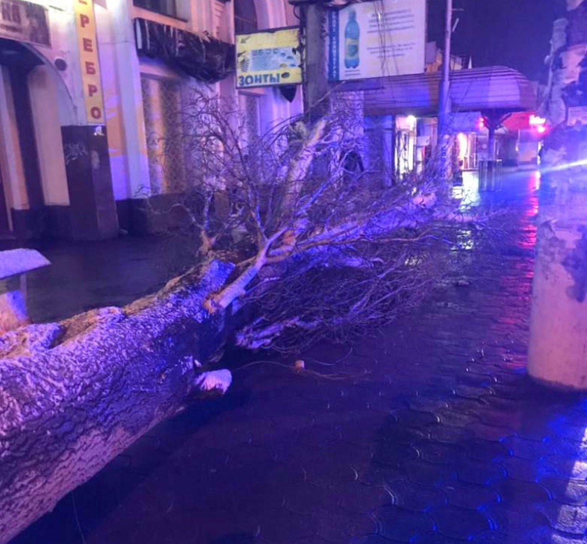 В Херсоне три упавших дерева перегородили проезжую часть