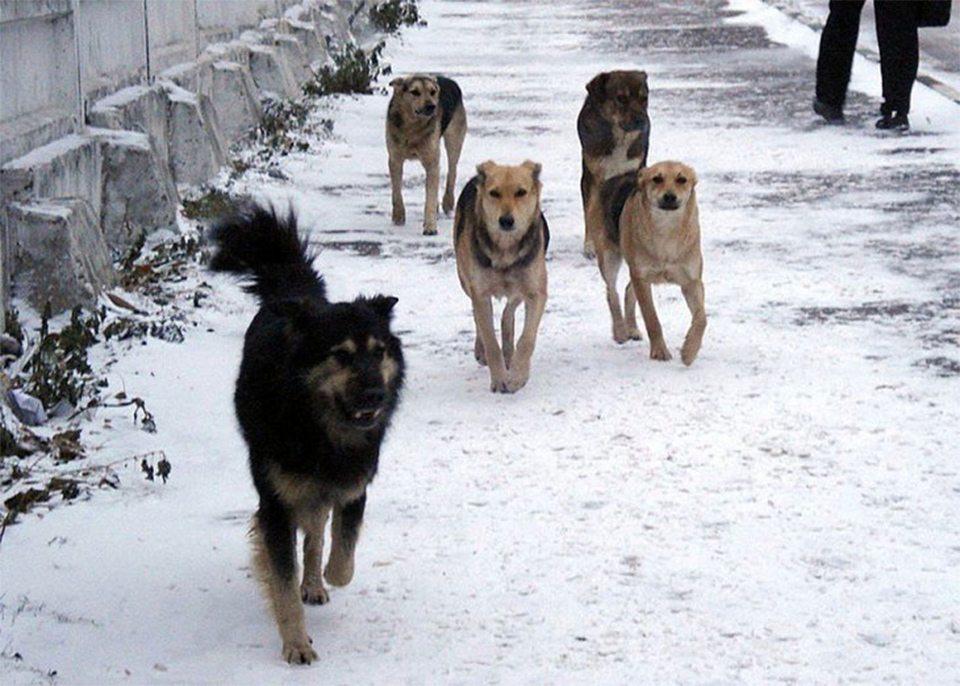 На Херсонщине бродячие собаки нападают на людей