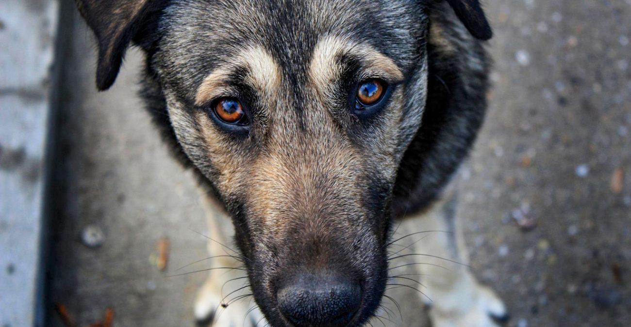На Херсонщині чоловік сплатив штраф за образу собаки