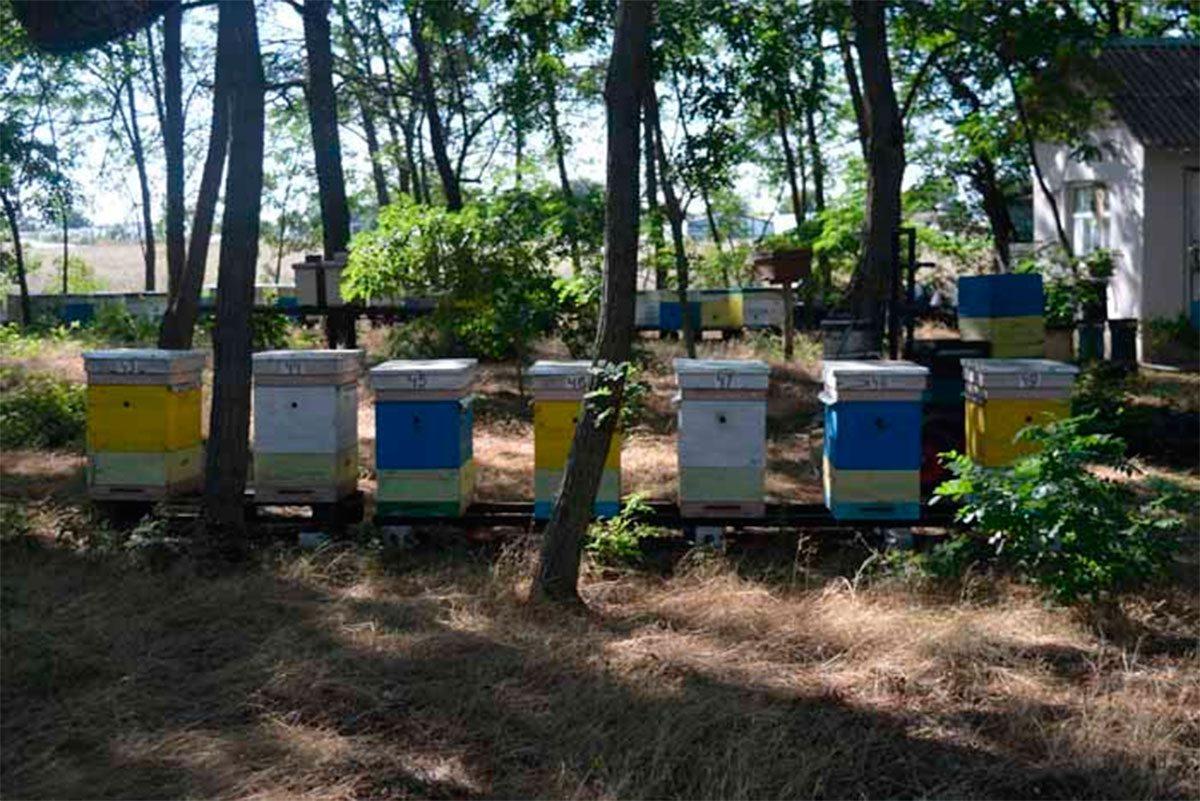 На Херсонщине развивается пчеловодство