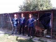 В Херсоне депутат возмутился тратой миллионов гривен на бродячих собак