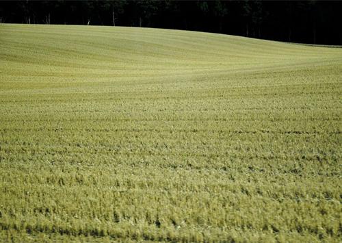 Земельная реформа: как не противопоставить арендатора арендодателю?