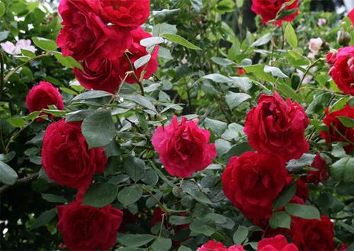 На Херсонщине воруют цветы