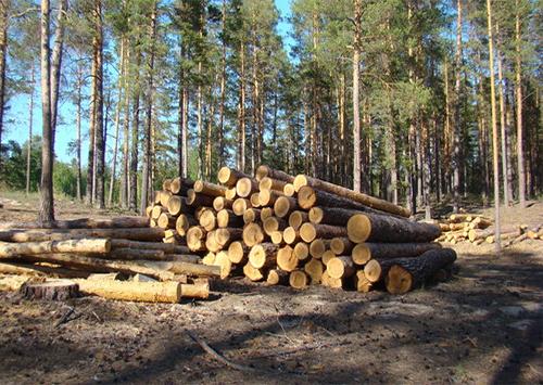 Стратегический резерв дров создали на Херсонщине