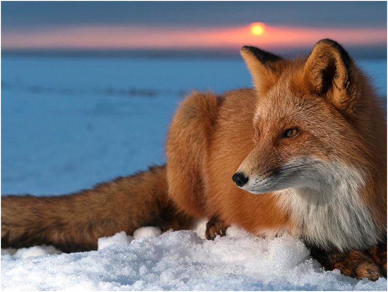 В Херсонской области на охоту будут ходить как на работу