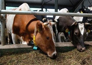 В Херсонской области значительно уменьшилось поголовье скота и птицы