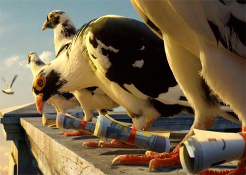 Сбережений незадачливого херсонца  голуби не сохранили