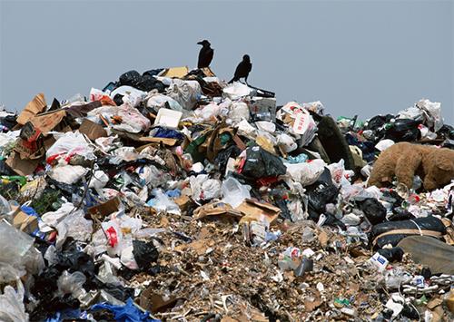 Цюрупинск утонет в мусоре?