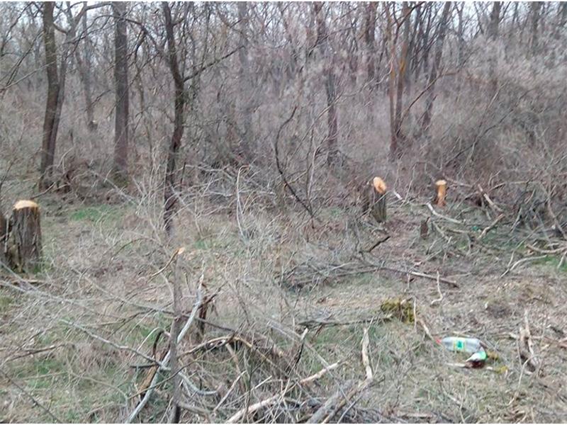 На Херсонщині ліси використовують для наживи